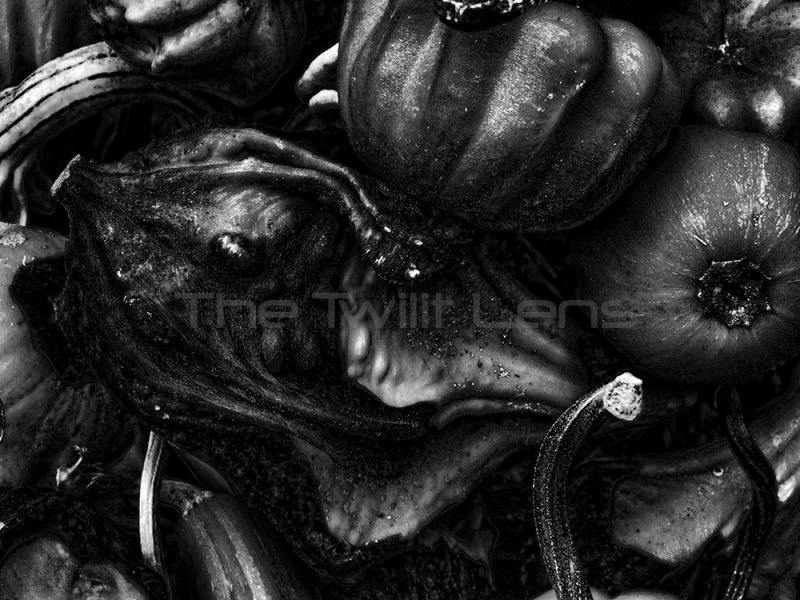 Giger in the Gourds: Lessons from an Art Master on Photography