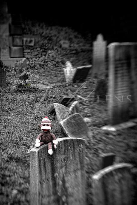 Sock Monkey in Graveyard