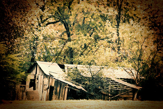 The Old Shed