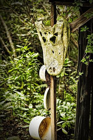 Hanging Gator Skull